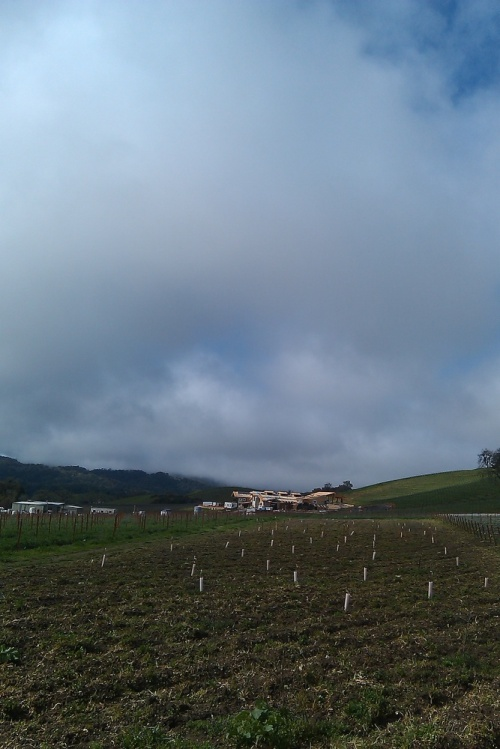 Vineyard_33